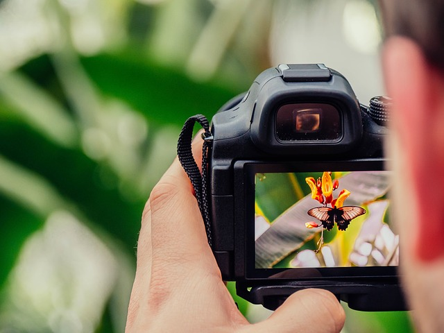 Best Compact Camera for Photographing Butterflies