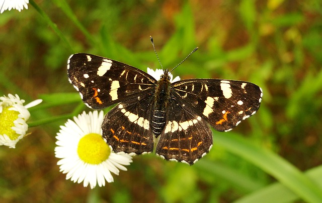 Put a Butterfly House in your Garden or Yard – Habitat For Butterflies