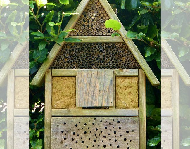 Insect Hotels – Should You Put One In Your Backyard? Big Guide to Insect Houses!